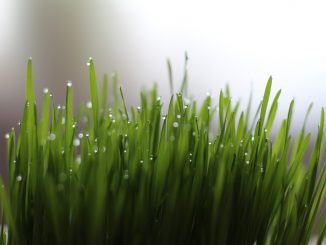 10 Things You Didn't Know Would Happen to Your Body from Drinking Wheatgrass Juice